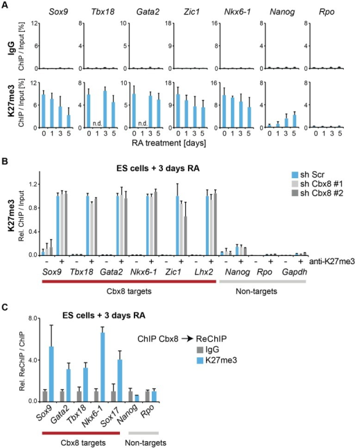 Cbx8 binds to persisting K27 methylation during differentiation.(A) Trimethylation of lysine 27 of Histone H3 was analyzed by ChIP during a time course of RA-induced differentiation of ES cells. Control ChIPs with IgG are shown in the top panel on the same scale. Error bars denote s.d.; n≥3; n.d.  =  not done. (B) ChIP of H3K27me3 (+) and IgG (-). For each Cbx8 target gene values are plotted relatively to control cells. Enrichments on-target genes are plotted relative to the average enrichment on all six target genes in control cells. Error bars denote s.d.; n = 3. (C) ReChIPs using anti-K27me3 antibody and IgG as control were performed on material enriched in a primary ChIP with anti-Cbx8 antibody. Data is plotted relative to IgG. Error bars denote the variation of the mean of two independent experiments.
