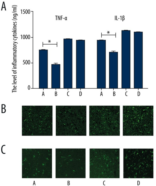 The level of pro-inflammatory cytokines expression at 24 h post-reperfusion. (A) TNF-α and IL-1β in cerebral ischemic penumbra determined by ELISA. Data are presented as mean ±SEM. (*p<0.05 vs. I/R+ vehicle control group). (B) The number of activated astrocytes and microglia increased after transfection with PPARγ siRNA. Scale bar=75 μm. A: I/R+ LV-control group, B: I/R+VNS+LV-control group, C: I/R+LV-shPPARr group, D: I/R+VNS+ LV-shPPARr group.
