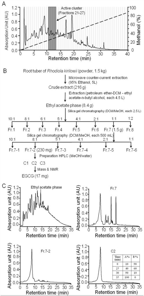 Fractionation of Rhodiola kirilowii (Regel) Maxim.A. HPLC fractionation of Rhodiola kirilowii (Regel) Maxim showing the chromatogram at 220 nm absorbance. Vertical bars show 80 collected fractions. B. Activity-directed fractionation scheme for the isolation CFTR inhibition compounds from Rhodiola kirilowii (Regel) Maxim. C. Analytical HPLC chromatograms of fraction ethyl acetate phase, Fr.7, Fr.7–2, and C2 at 220 nm absorbance. The gradient of analytical HPLC was developed with mobile phase A (acetonitrile) and mobile phase B (0.2% acetic acid) at 0.2 mL/min flow rate (inset)