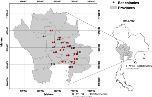 Study area of flying fox colonies. Study area covering 93,826.2 km2 of 23 provinces across western, central, and eastern Thailand (grey); 22 flying foxes' colonies (red circles); comparing the size and locations of the study area and Thailand map (right).
