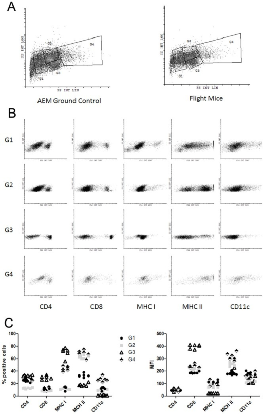 Cell population differences in total splenocytes collected from ground control mice.Splenocytes collected immediately post-sacrifice of ground control mice were stained with CD4, CD8, MHC I, MHC II, and CD11c. Analysis was conducted by flow cytometry. (2a) Example of gating strategy between flight mice and ground controls. (2b) Example of positive population composition of each gate identified in 2a from ground AEM control mice. (2c) Graph of percent positive and MFI from each marker of splenocytes from AEM control mice.