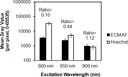Effect of excitation wavelength on relative Hoechst 33342 fluorescence and autofluorescence intensities. Autofluorescence (AF) from the extracellular matrix (black columns) and Hoechst 33342 nuclear fluorescence (white columns) were collected in the green channel (500–550 nm) with varying two-photon (2P) excitation wavelengths. Fluorescence intensities (mean gray value) were measured within regions-of-interest illustrated in Figure 3. AF-to-Hoechst 33342 ratios increased sharply with increasing excitation wavelength (800 nm to 900 nm). The y-axis (mean gray value of fluorescence intensity) is set to a logarithmic (base 10) scale. Error bars=standard deviation.
