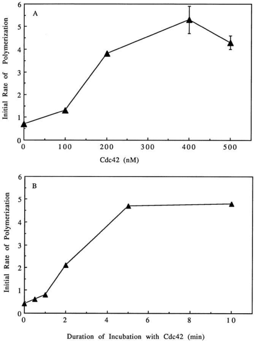 Effect of Cdc42 on nucleation sites for pyrenyl actin.  (A) Dose response of Cdc42-induced increase of nucleation sites.  The supernatant was incubated for 5 min at 37°C with varying  concentrations of GTPγS-charged Cdc42 before dilution into 1.5  μM pyrenyl-actin. The initial rate of polymerization of the pyrenyl-actin was determined from the pyrenyl fluorescence (refer to  Materials and Methods). Data shown is from a representative experiment. The nucleation sites increase with concentration eventually reaching a plateau. The absolute levels of nucleation and  the concentration of Cdc42 at the plateau vary somewhat with  different supernatants and Cdc42 preparations. (B) Time course  of Cdc42-induced increase in nucleation sites. The supernatant  was incubated at 37°C with 100 nM GTPγS-charged Cdc42 for  various times before dilution into 1.5 μM pyrenyl-actin. The initial rate of polymerization of the pyrenyl-actin was determined  from the pyrenyl fluorescence (refer to Materials and Methods).  Data shown is from a representative experiment.