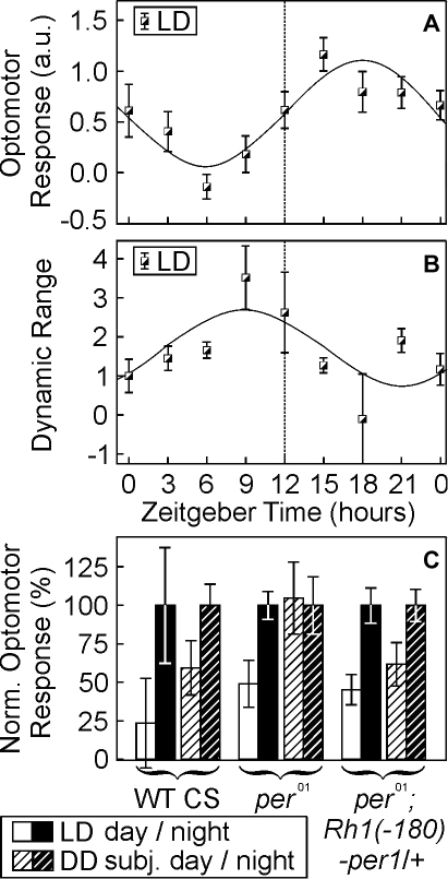 Sensitivity and dynamic range of optomotor behavior is controlled by experience-dependent and circadian mechanisms.a, b, LD-reared WT flies were behaviorally tested in the paradigms described in Fig. 2. Both, the sensitivity of the optomotor response at low light intensities (a, n>16 per point of time) and the dynamic range of optomotor behavior (b, n>30 per point of time) oscillated in a circadian, anti-phasic manner: highest behavioral sensitivity at night was accompanied by lowest dynamic range, and vice versa. c, Rescue of circadian oscillations in optomotor sensitivity by the restoration of the circadian clock in photoreceptor cells (Fig. 4d). Adult flies of the indicated genotypes were reared as described above and were behaviorally tested during their night- or day-phases (ZT 18–21 [set to 100%] and ZT 6–9, respectively). Irrespective of the genotype all LD-reared flies displayed a higher optomotor sensitivity during the night (F(1,74) = 14.6, p<0.0005). DD-reared wild-type flies as well as clock-rescued flies (per01; Rh1(−180)-per−1/+) showed a similar subjective day/night difference in behavioral sensitivity, which was absent in dark-reared per01-mutants. Error bars indicate s.e.m. values.