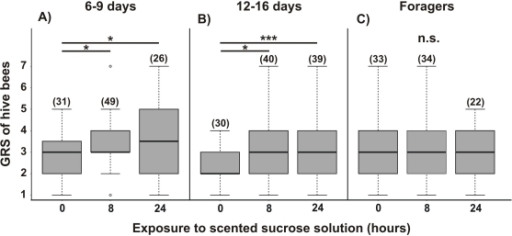 Gustatory responsiveness of free-flying bees after exposure to scented sucrose solution.GRSs of hive bees belonging to different age groups: 6/9 days old (A), 12/16 days old (B) and foragers (C) were measured. Bees were captured either while being offered an unscented sucrose solution (15% w/w) (0 hours) or after 8 h and 24 h of foraging from a scented sucrose solution (LIO, 15% w/w). The asterisks indicate statistical differences in a Kruskal-Wallis test and Dunn comparison (* p<0.05, ** p<0.001, n.s. not significant; for details see the text). The number of observations is shown in parentheses. Boxes indicate the inter-quartile range, horizontal lines within boxes indicate the medians, whiskers include all points within 1.5 times the inter-quartiles, empty circles indicate outliers.