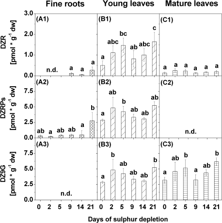 Contents of dihydrozeatin riboside (DZR) (1), dihydrozeatin riboside phosphates (DZRPs) (2), and dihydrozeatin-9-N-glucoside (DZ9G) (3) in fine roots (A), young leaves (B), and mature leaves (C) of poplars treated with sulphur depletion and of control plants (day 0). Data presented are the means ±SD of five replicates where each replicate consisted of two pooled plants. Lower case letters indicate significant differences at P < 0.05 between different time points within one tissue. dw, dry weight; n.d., not detected