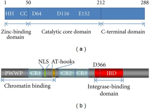 Domain organization of HIV-1 IN and LEDGF/p75. (a) HIV-1 IN is composed of an N-terminal domain (NTD), a catalytic core domain (CCD), and a C-terminal domain (CTD). The CCD contains the catalytically essential DD(35)E motif and the hot spots for interaction with the IBD in LEDGF/p75. The Asp and Glu residues of the CCD coordinate one or two Mg2+ ions and are involved in 3′ processing and DNA strand-transfer activities. (b) LEDGF/p75 has several structural motifs involved in chromatin tethering and protein-protein interactions. The PWWP domain, the charged regions (CRs), and AT-hooks are involved in chromatin binding. The C-terminus contains the well-characterized IN binding domain (IBD) and acts as a protein interaction playground. Asp residue 366 critical for HIV-1 IN binding is indicated.