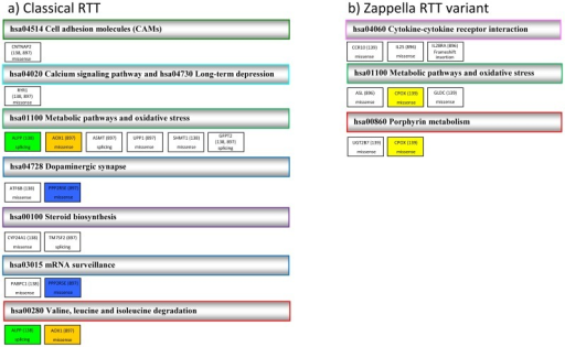 Relevant pathways of altered genes in classical Rett (a) and Zappella Rett variant girls (b).Only pathways in which at least two altered genes were included, or where one gene was mutated in either both classical Rett (RTT) (a) or both Zappella Rett variant (Z-RTT) (b) patients have been included. Genes that are involved in only one pathway are in white. Genes that are involved in more than one pathway are indicated with the same color. For each pathway the code assigned in the Kyoto Encyclopedia of Genes and Genomes (KEGG) database is indicated (see File S1). For each gene the mutation type is indicated.