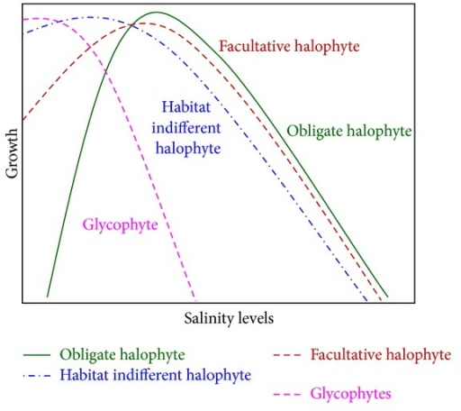 Possible growth pattern of halophyte under saline condition.