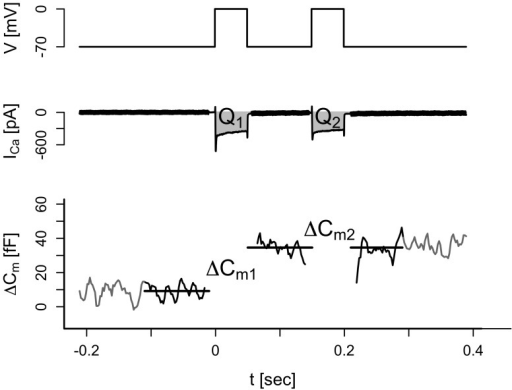 Demonstration of the double-pulse protocol.Single cells were depolarized from a holding potential of −70 mV to 0 mV during 50 ms. This was followed by a resting period of 100 ms and a second 50-ms depolarization from −70 mv to 0 mV (top trace). The evoked Ca2+ currents were measured and the charges for the first (Q1) and second (Q2) pulses were estimated (middle trace). In addition, the increases in membrane capacitance evoked by the first (ΔCm1) and second (ΔCm2) depolarizations were measured.