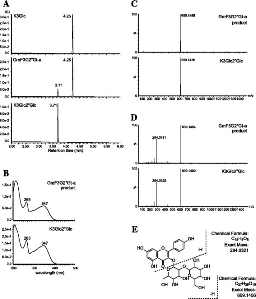 Identification of reaction product of GmF3G2″Gt-a (cultivar Nezumisaya). (A) Elution profiles of the standards (kaempferol 3-O-glucoside and kaempferol 3-O-sophoroside) and reaction product of GmF3G2″Gt-a protein. (B) UV spectra of the standard (kaempferol 3-O-sophoroside) and reaction product of GmF3G2″Gt-a protein. Mass spectra (C) and MS/MS spectra (D) of the standard (kaempferol 3-O-sophoroside) and reaction product of GmF3G2″Gt-a protein. E, The MS/MS fragmentation for kaempferol 3-O-sophoroside. K3Glc, kaempferol 3-O-glucoside; K3Glc2″Glc, kaempferol 3-O-sophoroside.