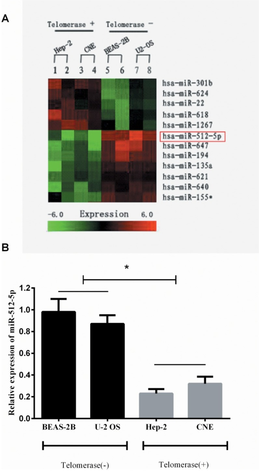 MiR-512-5p is down-regulated in in telomerase positive HNSCC cell lines.(A) MicroRNA array indicated that miR-512-5P was the most dramatically decreased among the miRs with significantly changed expression levels in telometase positive cell lines. (B) qRT-PCR analysis of the expression levels of miR-512-5p in various telomerase status cell lines. All data are shown as mean±SD. *P<0.05.