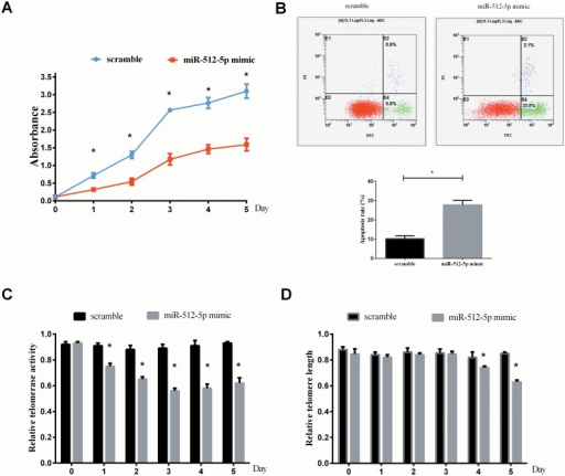 The effect of miR-512-5p on CNE cell growth, apoptosis and telomere maintenance.(A) MTT assay showed that overexpression of miR-512-5p in CNE cells resulted in inhibition of cell growth in vitro. (B) Forty-eight hours post-transfection,apoptosis was determined by flow cytometric detection of Annexin-V-FITC-positive/PI-negative cells. (C) One day post-transfection, a remarkable inhibition of telomerase activity was observed in cells transfected with miR-512-5P mimic in comparison with the cells transfected with scramble. (D) Four days post-transfection, miR-512-5p mimic groups showed a significant decrease in relative telomere length. All data are shown as mean±SD of triplicate experiments. *P<0.05.