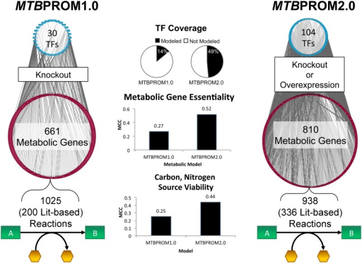 Comparison of the regulatory-metabolic model attributes.The features are compared between the initial regulatory-metabolic model constructed for MTB described in [16] (MTBPROM1.0) and the updated model (MTBPROM2.0). MTBPROM2.0 contains additional coverage of regulation and metabolism, with improved prediction of essential metabolic genes and growth viability in carbon and nitrogen sources, as quantified by the Matthews Correlation Coefficient (MCC, see Methods). The PROM simulation framework has also been extended to predict TF overexpression in addition to knockout phenotypes.