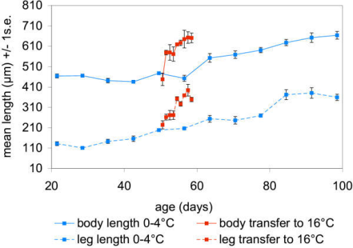 Change in mean length of body and third thoracic leg with age (days) in embryos maintained at 0–4°C and then transferred from 0–4°C to 16°C at day 49.