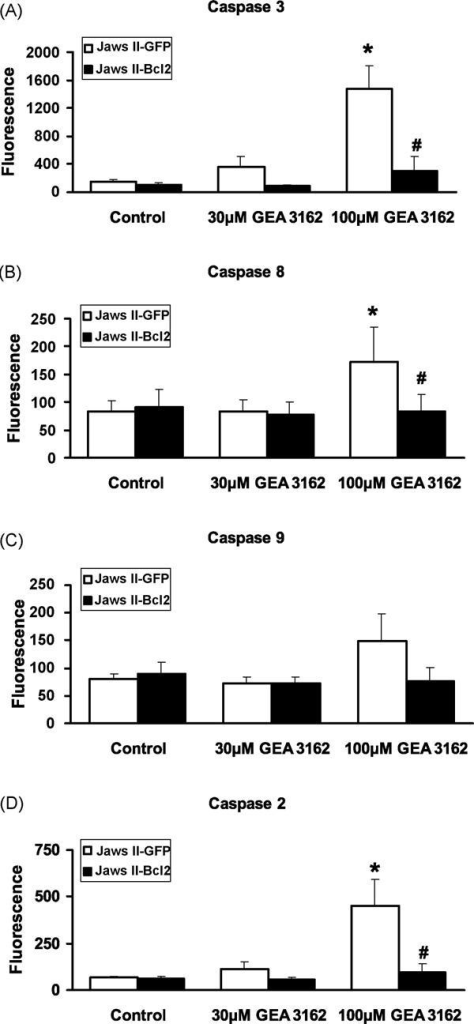 Specific caspases activated by GEA 3162. GFP or Bcl-2-overexpressing Jaws II cells were exposed to GEA 3162 (30–100 μM) for 4 h before assessment of the cleavage of specific fluorogenic substrates for (A) caspase 3, (B) caspase 8, (C) caspase 9 and (D) caspase 2. Cells were harvested, centrifuged and lysed, then lysates incubated with specific caspase substrates immobilised on a plate, with fluorescence indicating the extent of caspase activation. Data represents mean ± S.E.M. following n = 4 experiments performed in duplicate. Asterisks represent significant (p < 0.05) difference from control (untreated) cells for each cell type, and hashes represent significant differences between fluorescence in GFP and Bcl-2 cells for a given treatment (repeated measures ANOVA with Student–Newman–Keuls post-test).