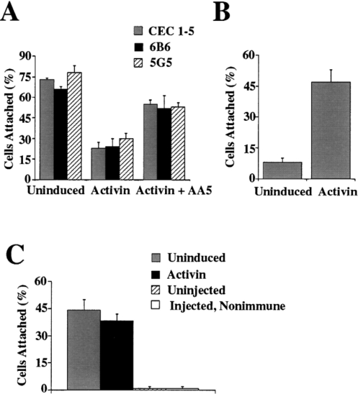 Activin regulation of blastomere attachment to anti– C-cadherin mAbs. (A) Attachment of uninduced, activin-induced, or activin-induced and mAb AA5-treated blastomeres  to substrates coated with CEC1-5, anti–C-cadherin mAb 6B6, or  anti–C-cadherin mAb 5G5. (B) Uninduced and activin-induced  blastomere attachment to fibronectin. (C) Attachment of uninduced and activin-induced blastomeres expressing an IL-2β receptor–C-cadherin cytoplasmic tail fusion protein to substrates  coated with anti–IL-2β receptor mAbs.