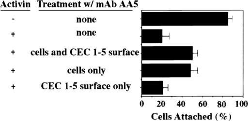 mAb AA5 activates cell-associated C-cadherin only.  The ability of mAb AA5 to activate C-cadherin adhesion was determined after its addition to different components of the cell attachment assay. It was added either to the complete attachment  assay (as in Fig. 2), to the CEC1-5–coated substrate alone  (rinsed), or to the blastomeres alone (rinsed).