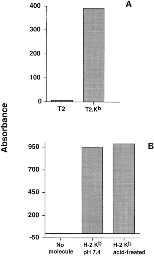 (A) Reactivity of alloreactive anti H-2Kb hybridoma 34.9  with non-transfected T2 and T2 cells transfected with H-2Kb. (B) Reactivity of hybridoma 34.9 to immobilized soluble H-2Kb treated with either PBS at pH 7.4 (middle) or 100 μM sodium acetate/acetic acid buffer  at pH 3.0 (right). In both panels, activation was determined by a colorimetric assay with ONPG as the β-galactosidase substrate. Absorbance was  read at 405 nM.