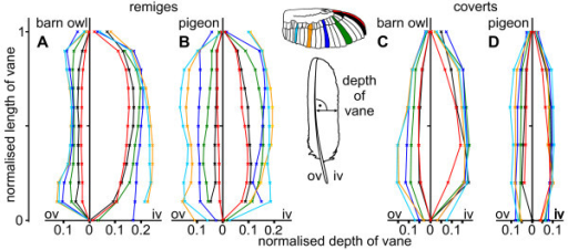 Depth of vane in barn owl and pigeon wing feathers. Normalised depth of the outer and inner vane of remiges (A, B) and coverts (C, D) in the barn owl (A, C) and the pigeon (B, D). The colours indicate different feathers. Their position is presented at the wing. The depth was measured at right angles to the rachis and was then normalised with respect to the whole length of vane.