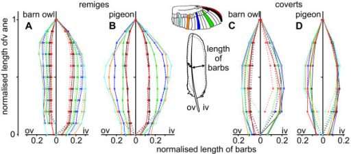 Length of barbs in barn owl and pigeon wing feathers. The normalised length of barbs of the inner (iv) and outer vane (ov) of remiges (A, B) and coverts (C, D) from the barn owl (A, C) and the pigeon (B, D) are shown. The length was measured from the base to the tip and then normalised with respect to the whole length of vane. The area outside the dotted lines indicates regions of unconnected barbs forming the plumulaceous barbs (in both species), the fringes (in the barn owl) or serrations (p10 and gpc10 in the barn owl).