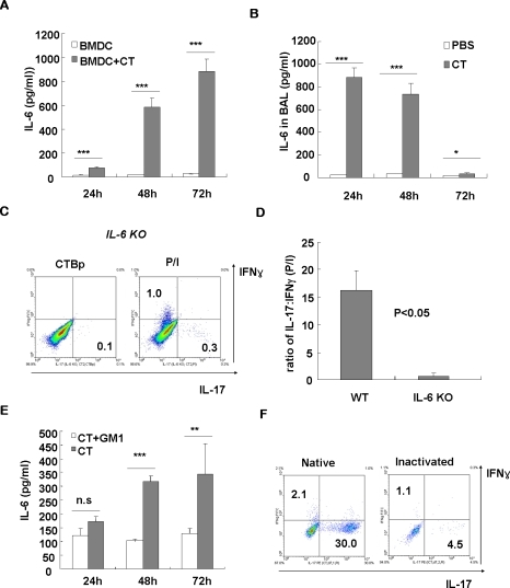 CT induces IL-6 production in vitro and in vivo, which is required for Th17-driving activity.(A) Dendritic cells were generated from bone marrow of BALB/c mice by culturing with GM-CSF and IL-4. After 6 days, DCs were purified and cultured in the presence or absence of CT. At indicated time points, the levels of IL-6 cytokine in the supernatant were determined by ELISA. (B) B6 mice were intranasally injected with 2 µg of CT and BAL samples were prepared at indicated time points. The levels of IL-6 in the BAL fluids were measured by ELISA. (C, D) IL-6KO mice with B6 background were intranasally injected with CT, and lung mononuclear cells were prepared at day 7 and IL-17- and IFN-γ-producing CD4 T cells were measured by ICS upon stimulation. (E) For blocking experiment, CT was pre-incubated with 5-fold molar excess of ganglioside GM1 and then added to the DC culture. Data are average ± SEM, and representative of two experiments. (F) CT was heat-inactivated by boiling for 30 min and intranasally administered into normal B6 mice. At day 7, lung tissues were isolated, stimulated with PMA/ionomycin, and stained for CD4, IFN-γ, and IL-17. *, P<0.05; **, P<0.01; ***, P<0.001; n.s., not significant.