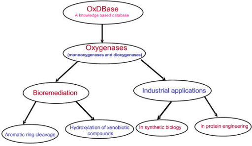 Potential uses of oxygenases.