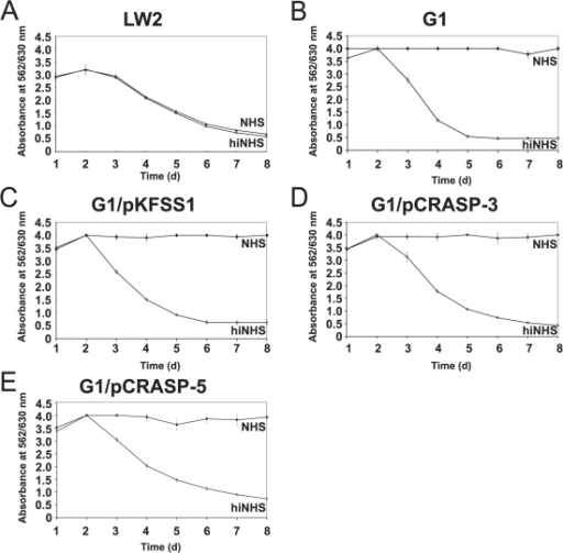 Serum susceptibility of transformed B. garinii G1.A growth inhibition assay was used to investigate susceptibility to human serum of B. burgdorferi s.s. strain LW2 (A), and B. garinii strains G1 (B), G1/pKFSS1 (C), G1/pCRASP-3 (D), and G1/pCRASP-5 (E). Spirochetes were incubated in either 50% NHS (filled diamonds) or 50% heat-inactivated NHS (open diamonds) over a cultivation period of 8 days at 33°C, respectively. Color changes were monitored by measurement of the absorbance at 562/630 nm. All experiments were performed three times in which each test was done at least threefold with very similar results. For clarity only data from representative experiments are shown. Error bars represent ± SD.