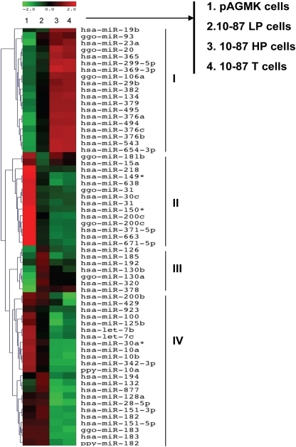 Hierarchical clustering of miRNA expression.miRNAs included in the heat-map had a fold change >±2 and were significantly expressed (p<0.01). Each row shows the relative expression level for a single miRNA and each column represents miRNA profiles of the average triplicate array data: (1) pAGMK cells; (2) 10-87 LP cells; (3) 10-87 HP cells; (4) 10-87 T cells. The red or green color indicates relative high or low expression, respectively. Expression clusters representing different patterns of up-regulation to down-regulation are depicted by Roman numerals on the right hand side of the Figure.