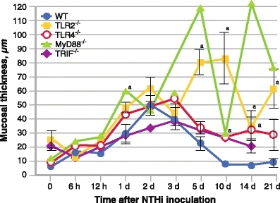 A quantitative evaluation of mucosal thickness in the middle ear cavity throughout the course of otitis media. Mucosal thickness is greater in mice lacking key Toll-like receptor (TLR) signaling genes than in wild-type (WT) mice (n = 6–8 middle ears per time point). Bars represent the mean ± SEM. aSignificantly different from WT (P < 0.05). MyD88—myeloid differentiation factor-88; NTHi—nontypeable Haemophilus influenzae; TRIF—Toll/interleukin-1 receptor domain containing adaptor inducing interferon-β