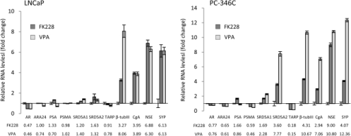 Differential gene expression in virus-transduced prostate cancer cells after 48 h of treatment with HDAC inhibitors.LNCaP and PC-346C were transduced with Ad[i/PPT-LUC] and then incubated with 3 ng/ml FK228 or 5 mM VPA for 48 h. RNA was extracted, cDNA was produced and gene expression was evaluated by quantitative PCR (triplicate samples). Gene expression in FK228 and VPA-treated cells was related to untreated cells. A two-fold difference in gene expression was set as a limit for true difference. The expression of prostate-associated genes (AR, ARA24, PSA, PSMA, SRD5A1, SRD5A2 and TARP) was not considerably affected by the HDACi. The expression of neuroendocrine-associated genes (β-tubIII, CgA, NSE and SYP) was increased in HDACi-treated cells.