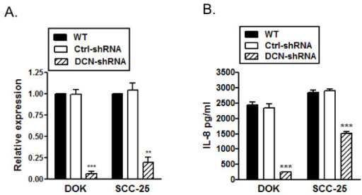 Reduced IL-8 production in decorin Silenced DOK and SCC25. A, RNA was extracted from WT, control and decorin silenced DOK and SCC-25 cells and cDNA was subjected to quantitative RT-PCR, normalized IL-8 expression from one representative experiment of three. B, Cells were cultured and IL-8 was measured in 24 h culture supernatants using ELISA. Data are presented as mean ± SD of three replicates of one representative experiment of four. ** p < 0.01, *** p < 0.001 compared to respective controls.
