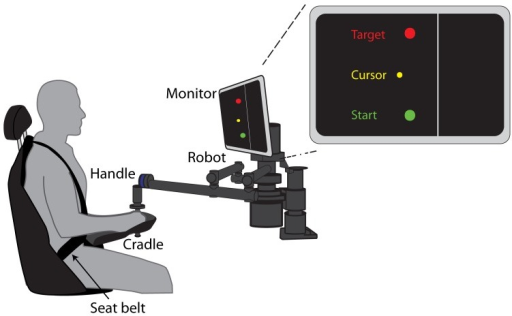 "Experimental Setup. Seated participants grasped the handle of a robotic arm and made 15 cm reaching movements from a start circle to a target circle. The forearm was supported by a cradle attached to the robotic arm. Visual feedback of the start, target, and cursor were provided on a monitor mounted at eye level. The location of the ""cliff"" was indicated by the line 2.5 cm to the right of the start and target circles."
