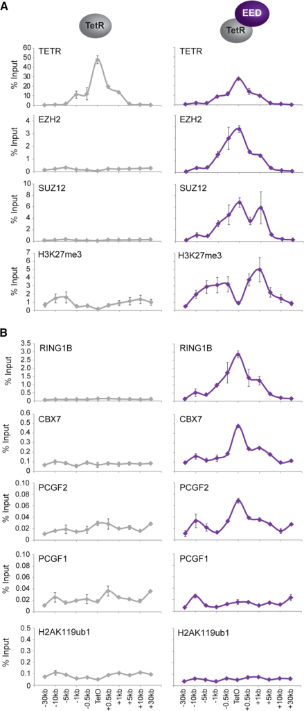 Hierarchical Recruitment of Canonical PRC1 Fails to Result in H2AK119ub1(A) ChIP analysis for fusion protein occupancy (TetR), PRC2 components, and H3K27me3 across the TetO-containing locus in lines expressing TetR alone and a TetR-EED fusion.(B) ChIP analysis for PRC1 components and H2AK119ub1 performed as described in (A).All ChIP experiments in (A) and (B) were performed at least in biological duplicate with error bars showing SEM.