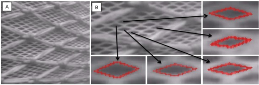 Image of the netting wall (mesh size15.4 mm) of the krill trawl captured during fishing operations (A).Digitizition of selected meshes to establish realistic values for mesh opening angles (oa) (B). The camera is located 10 m from the codline-end, pointing backwards. The intire 15.4 mm trawl was covered with 200 mm double 5 mm PE diamond netting for protection.