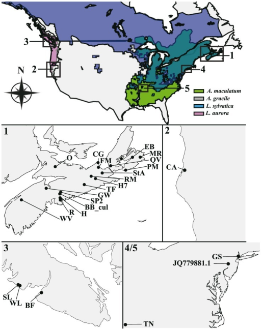 Map of the geographic range and collection sites for egg masses of four amphibian hosts.Species range maps are plotted on a map of North America (see the Materials and Methods). The dark green color represents a range overlap between L. sylvatica and A. maculatum, and the pink color represents a range overlap between L. aurora and A. gracile. Numbered locations correspond to higher detail panels below. The maps of collection sites for algae corresponding to egg masses from A. maculatum and L. sylvatica in Nova Scotia, Canada (1), A. gracile in California, USA (2), L. aurora and A. gracile in Vancouver Island, British Columbia, Canada, and A. maculatum in New Jersey and Tennessee of USA (4/5).