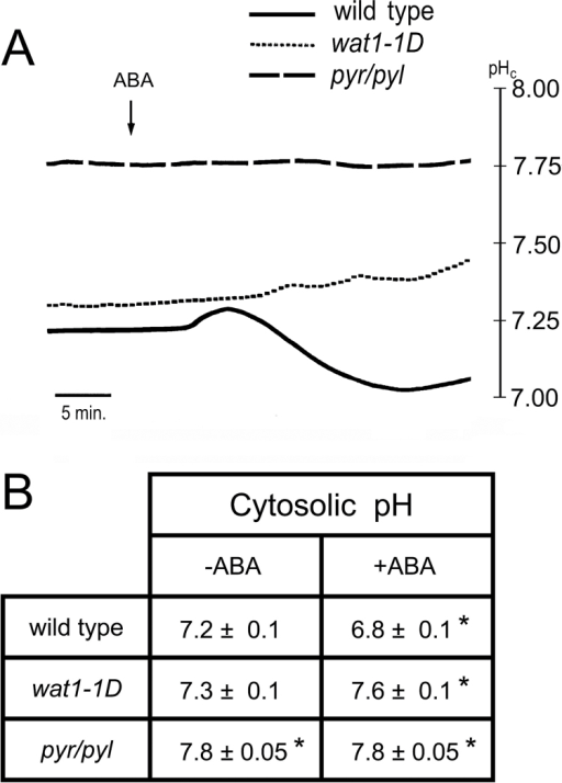 Effect of ABA on cytosolic pH (pHc) of root epidermal cells measured with microelectrodes in wild type Col-0, the wat1-1D mutant, and the sextuple knockout in ABA receptors mutant 112458 pyr/pyl (pyr/pyl). (A) Time course of a typical experiment with wild type (continuous line), wat1-1D (short dashes), and pyr/pyl (long dashes). (B) Statistical data from four to six independent experiments as in (A). The average cytosolic pH±standard error is given. * indicates significant difference (P<0.05 by Student's t-test) compared with wild type without ABA.