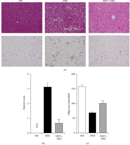 Histopathological evaluation of fat and liver tissue in DIO mice. C57BL/6 mice were fed with normal diet (ND) or high-fat diet (HFD) for 10 weeks and then administered with control water or KBG (500 mg/kg, p.o., daily) for 12 weeks under the same feeding condition. After 8 weeks of control or KBG treatment, mice fed with HFD were changed to ND until the termination of experiment with maintaining KBG treatment for another 4 weeks. (a) Representative images (×200) of H&E staining of liver (upper panels) and white adipose tissue (lower panels) of DIO mice are shown. (b) Steatosis scores of DIO mice. N.D.: not detected. (c) Observed number of adipocyte counts of WAT in DIO mice. Data are mean ± SEM (n = 7–15). **P < 0.001.
