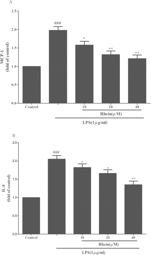 The effect of rhein on MCP-1 (A) and IL-8 (B) release induced by LPS in HK-2 cells. Cells were treated with LPS with or without rhein (10, 20, and 40 μM) for 24 h. 100 μl of culture medium in each group was taken out to measure the levels of MCP-1 and IL-8 using ELISA kits. Data are represented as mean ± SD of three independent experiments. ###p < 0.001 vs. control group, *p < 0.05, **p < 0.01 vs. LPS alone.