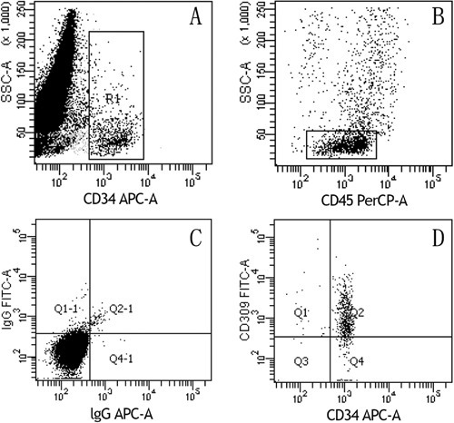 Representative flow cytometric analysis plots showing sequential gatingstrategy used to enumerate circulating endothelial progenitor cells (cEPCs):CD34+ and CD45-/dim cells were gated to exclude hematopoietic cells expressingCD45 antigen (A,B). C,Negative control, and D, cells co-expressing CD34 and CD309were designated as cEPCs.