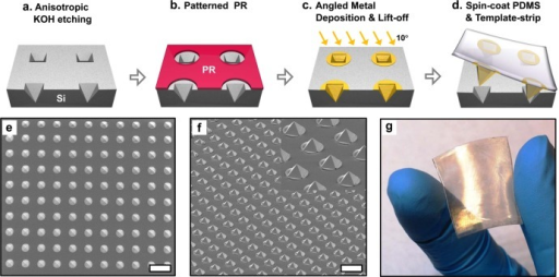Fabrication of isolated gold pyramids template-stripped onto PDMS. (a) An array of pyramidal pits is formed by anisotropic etching in KOH through circular openings in a Si3N4 etch mask which is subsequently removed. (b) An array of 8 μm diameter circles in photoresist is patterned on top of the etched inverted pyramid array. (c) 135 nm of Au followed by 10 nm of Ti are deposited at 10° from normal using a directional e-beam evaporator. After lift-off, an array of disconnected, inverted Au pyramids is generated. (d) After oxygen plasma exposure to break bridging oxygen bonds, PDMS is spin-coated over the Au pyramidal pit array and cured at 60 °C for 12 h. The PDMS layer is then peeled off of the Si wafer. (e) Top-view and (f) bird's eye view SEMs of a Au pyramid array on a PDMS substrate. Scale bar: (e), (f) 20 μm. (g) Photograph of 1 in. × 1 in. flexible PDMS film fully covered with gold pyramids.