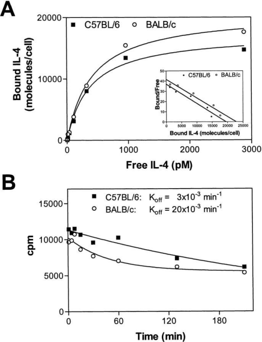 125I–IL-4–binding to the IL-4R allotypes expressed as cell  surface molecules. Ligand binding analysis was performed with human TF-1  cells expressing C57BL/6 or BALB/c IL-4R. (A) Equilibrium binding  studies. Cells were incubated with various concentrations of 125I–IL-4 for  90 min at 4°C and assayed for binding as described in Materials and Methods. Data are corrected for nonspecific binding and are presented as saturation binding curve or Scatchard plot (inset). (B) Dissociation of IL-4  from the transmembrane receptors. Transfected TF-1 cells were incubated  in the presence of 1.2 nM 125I–IL-4 for 90 min at 4°C, washed twice, resuspended in medium, and incubated at 4°C. Aliquots of 5 × 105 cells were  taken at the indicated time points and the amount of IL-4 still bound to  the cell surface was determined. The calculated Koff values for this experiment are indicated.