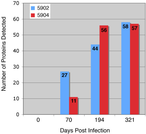 Total number of M. paratuberculosis recombinant proteins detected by sera from experimentally infected cattle. The graph shows the number of proteins on the 96-dot array (y-axis) that were detected at the day post infection (x-axis) for each calf. The total number of proteins detected is indicated on each bar. Note that similar numbers of proteins were detected by each animal at the end of the study period.