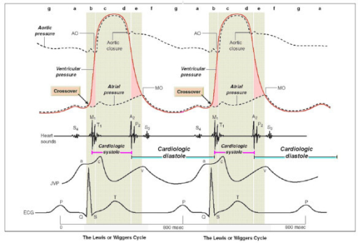 The Mechanical Events In The Cardiac Cycle First Assem Open I