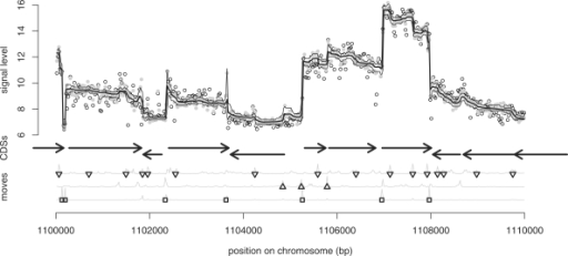 Transcriptional landscape inference. Analysis of the signal on the (+)-strand of a 10000 bp segment of the B.subtilis chromosome. Upper part: open circles show the original signal. Closed gray circles represent the signal after 'correction' with the gDNA covariate. The thick black line shows the expectation of the transcript level as computed with the HMM. Thin black lines correspond to the 95% CI. Middle part: horizontal arrows indicate GenBank CDSs. Lower part: shift moves along the most likely trajectory are shown as squares. Upward and downward drift moves are indicated by point-up and point-down triangles, respectively. Move probabilities are represented as gray lines.