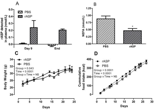 Effects of recombinant ASP treatment on plasma NEFA levels, body weight and food intake in wildtype mice. Fasting plasma samples from PBS treated mice (n = 6, white hatched bars) and rASP treated mice (n = 5, gray hatched bars). (A) Human rASP detected in mouse plasma following 9 days and 4 weeks treatment. (B) Fasting NEFA levels after 4 weeks treatment. Results were analyzed by unpaired two-tailed t-test. (C) Body weight (g) and (D) cumulative food intake (kcal) for PBS (n = 6, white circles) and rASP (n = 5, black circles) treated mice. Results were analyzed by two-way ANOVA. Group and Time P values are reported in graph. All values are presented as mean ± SEM, where * P < 0.05.