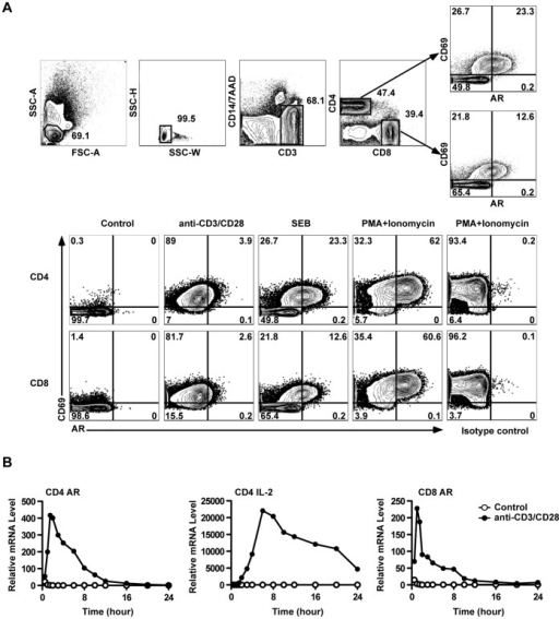 TCR activation induced AR expression in human PBMC T cells.(A) PBMC were treated as indicated and analyzed by ICS. The upper panels show the gating strategy to identify activated (CD69+) CD4 or CD8 T cells expressing AR. The lower panels show the induction of AR by different stimuli in CD4 or CD8 T cells. (B) AR and IL-2 mRNA were measured by RT-PCR in purified CD4 and CD8 T cells after activation by anti-CD3+anti-CD28 beads. Results in (A) and (B) are representative of at least three experiments.
