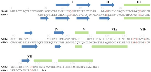 Secondary structure-based sequence alignment of OspG with human JNK3.The protein names are indicated at the left of the alignment. The key residues in the kinase domain are colored in red. Predicted secondary structures of OspG are shown on top of the OspG sequence. Secondary structures determined from crystal structure of JNK3 are shown underneath the sequence of JNK3 in the alignment. Green ovals are α helices and blue arrows are β strands. The sub-domains are labeled with Roman numerals.