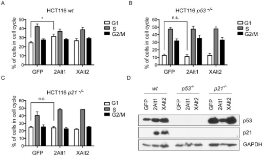 MDM2-ALT1 over-expression leads to G1 phase cell cycle arrest in a p53-dependent and p21-dependent manner.A. HCT116 wild-type (wt), B. HCT116 p53−/− and C. HCT116 p21−/− cells were transfected with myc-tagged GFP or MDM2-ALT1 (2Alt1) or MDMX-ALT2 (XAlt2), harvested 24 hours post-transfection and stained with propidium iodide solution and sorted for DNA content. The bar graphs represent the percentage of cells in the various phases of the cell cycle. Error bars represent the standard error mean from at least 3 independent experiments. HCT116 cells that are wildtype (A) show significantly higher percentage of cells in G1-phase upon MDM2-ALT1 expression (31.44% ±2.45 SEM) compared to GFP-expressing cells (24.40% ±1.40 SEM; n = 5, p = 0.0369). In case of MDMX-ALT2 over-expression in HCT116 wildtype cells, there is no significant change in percentage of cells in G1 phase compared to negative control GFP-expressing cells (p =  0.4389). HCT116 cells that are  for p53 (B) or p21 (C) do not show any differences in the percentage of cells in any of the cell cycle phases upon over-expression of GFP or MDM2-ALT1 or MDMX-ALT2. D. Representative immuno blot showing expression of p53, p21 and loading control GAPDH in HCT116 wt, p53−/− and p21−/− cells.
