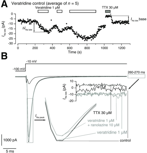 Activation by veratridine of the late Na+ current in Nav1.5-expressing cells.A. Time course ofINa late (average transmembrane current during the last 100 ms of a 300-ms depolarizing pulse to -10 mV from a holding potential of -100 mV) during a typical experiment with repeated applications of veratridine 1 μM and a final application of TTX 30 μM.B. Overlap of individual sweeps showing the peak and late component ofINa during the application of veratridine 1 μM, the co-application with ranolazine 10 μM, and with TTX 30 μM. The peak and lateINa component are shown separately in inserts using magnified time and voltage scales, respectively.